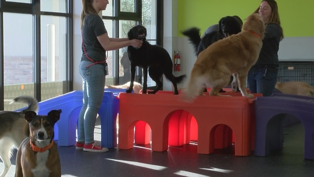 Dogtopia daycare and spa opens Albuquerque location