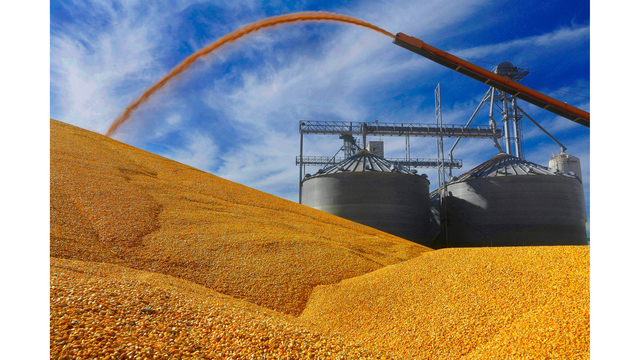 Expected South Dakota corn, soybean acres almost unchanged