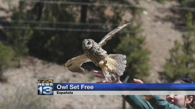 Owl receives treatment after flying into Albuquerque high-rise
