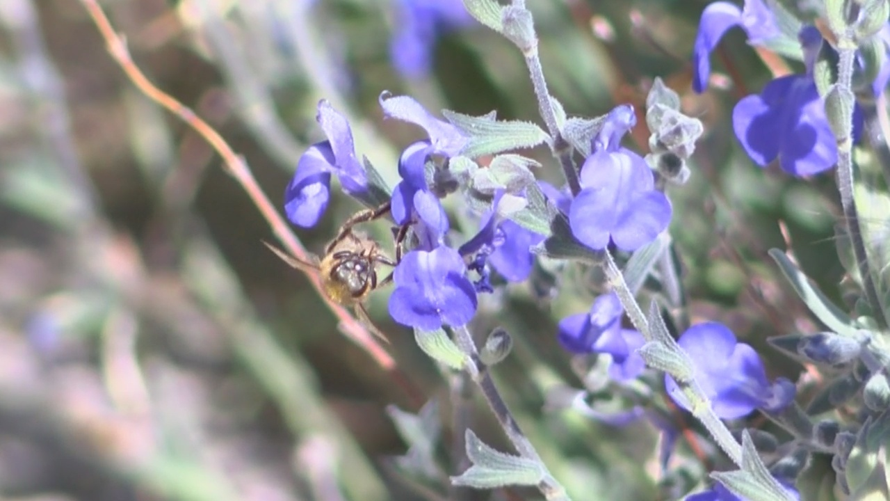 local bee keepers say bees suffered during unusual winter