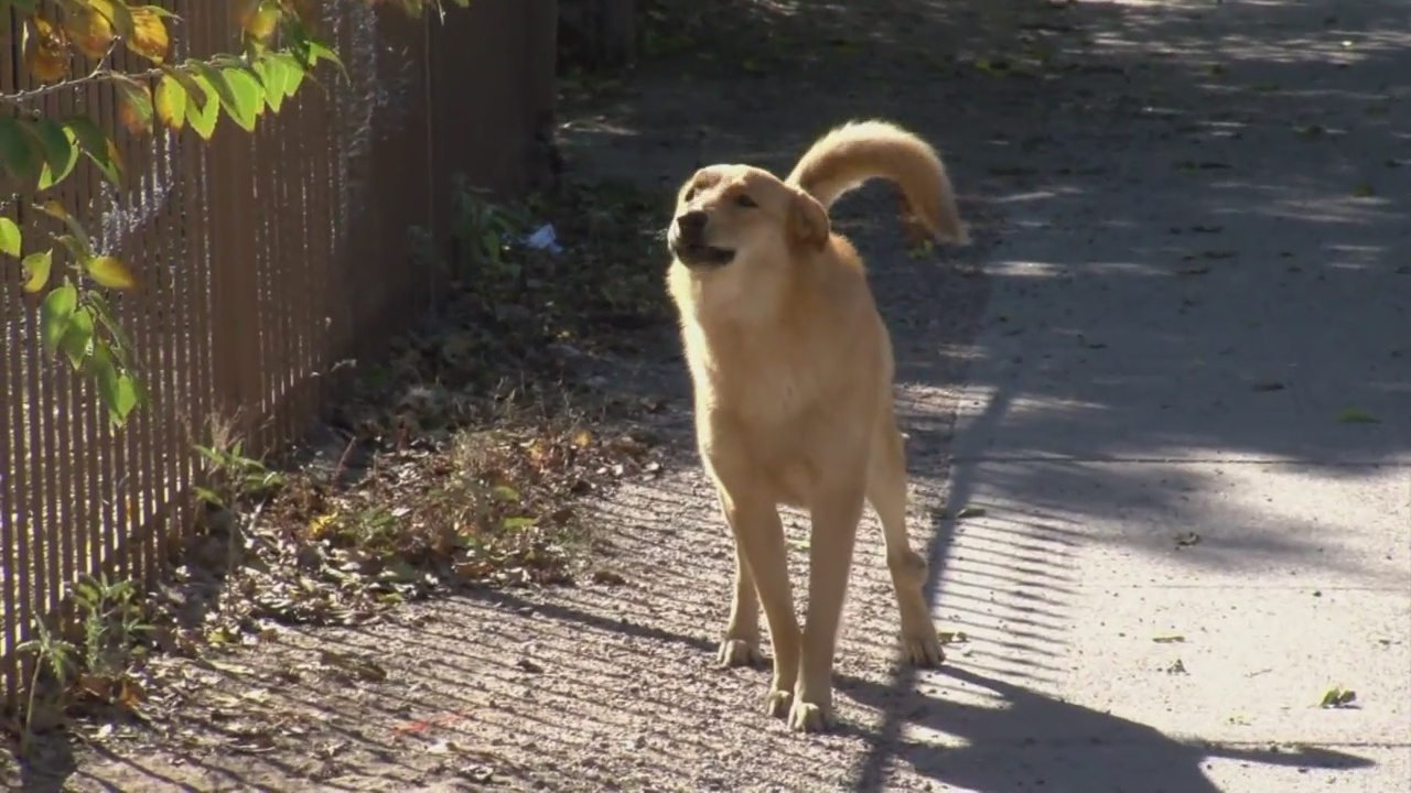 Thousands of strays, hundreds of dog bite calls reported ...