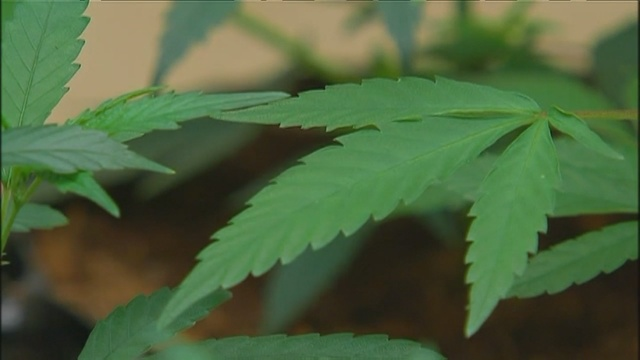 NM marijuana legalization effort unlikely to pass in 2019 session