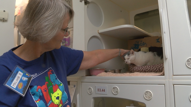 Albuquerque animal shelters' Fraidy Cats program helps place 500th cat in forever home
