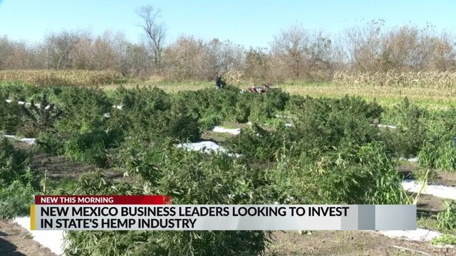 New Mexico business leaders looking to invest in state's hemp industry