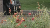 Wildflower-filled medians intended to help bee population